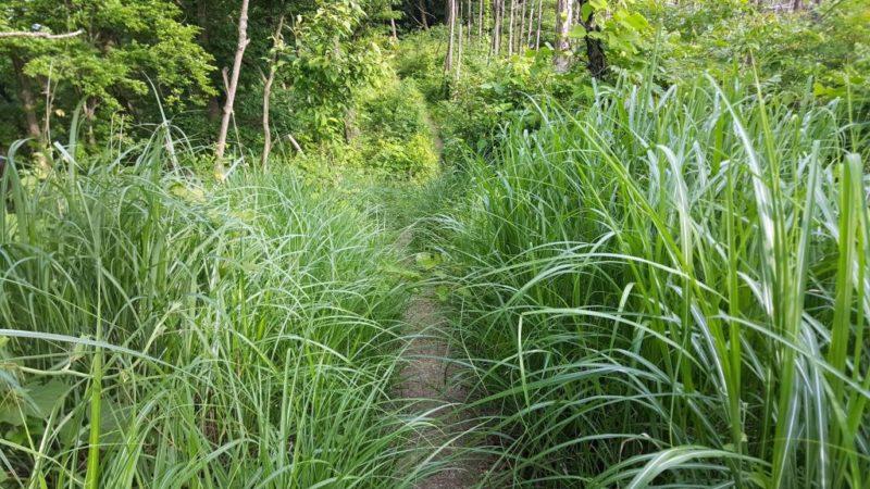 入山峠付近の藪