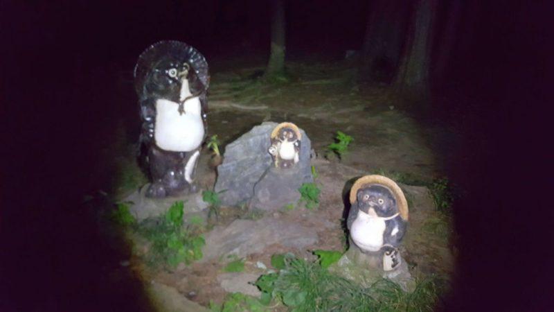夜の陣馬山~高尾山、タヌキ
