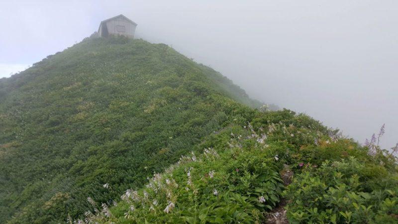 ユートピア登山道のお花畑