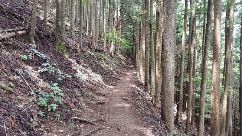 鴨沢からの登山道