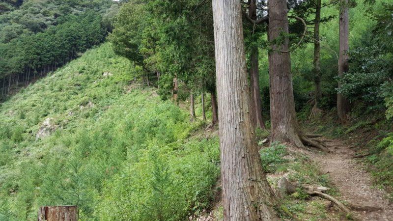 今熊神社奥宮の参道