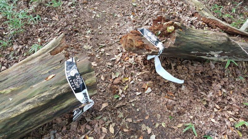 ハセツネコース上の倒木