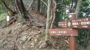 生藤山のまき道