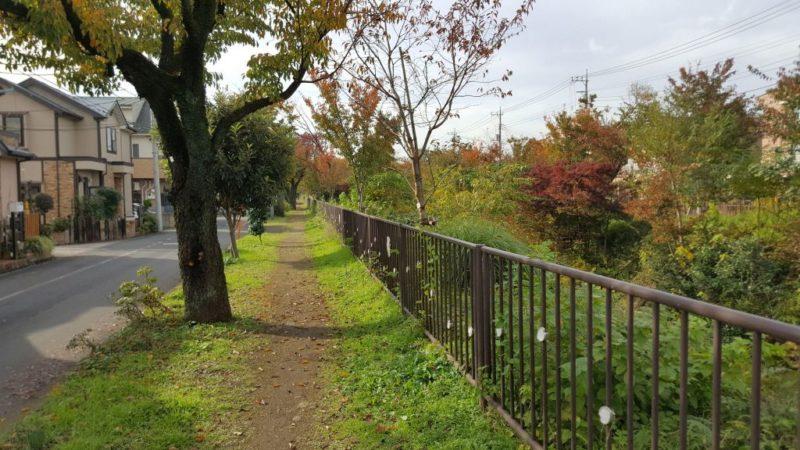 玉川上水の南側遊歩道