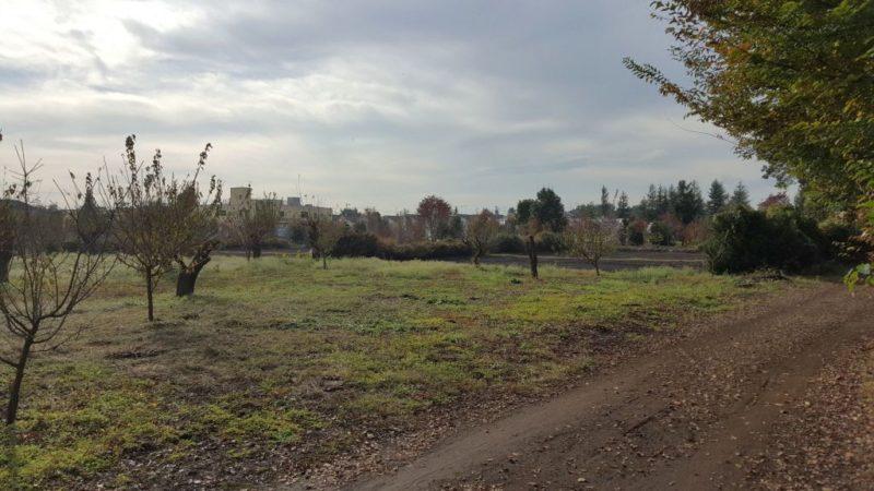 玉川上水付近の畑