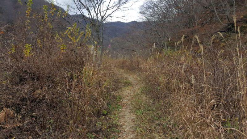 登山口に続く藪道