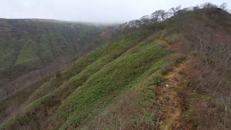 前山~能郷白山の稜線