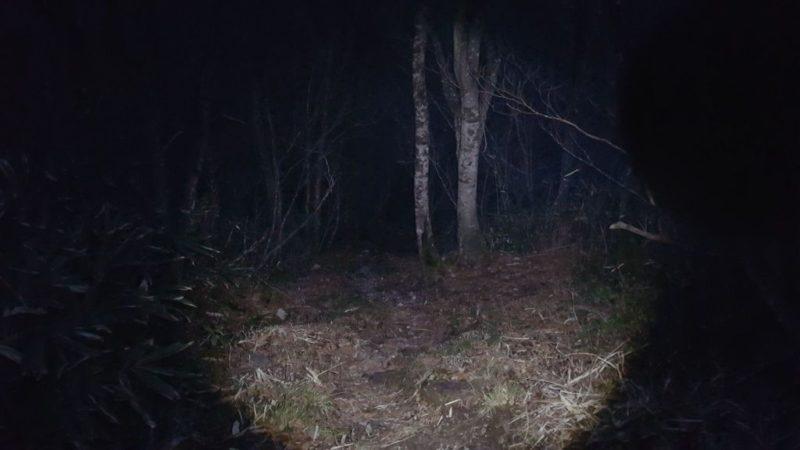 夜の能郷谷ルート